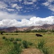 Pastureland in Himalayas — Stock Photo