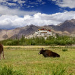 Stock Photo: Pastureland in Himalayas