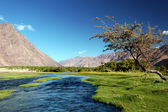 Landscape with river in mountains. Himalayas — Stock Photo