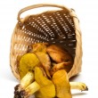 Basket with mushrooms — Stockfoto