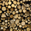 Stock Photo: Sawn ends of tree trunk and boles log decked