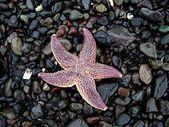 Starfish on the pebble background — Stock Photo