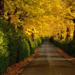 Autumnal path - Stock Photo