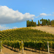 Stock Photo: Vineyards in autumn