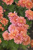 Flores de outono — Foto Stock