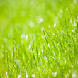 Stock Photo: Green grass close-up