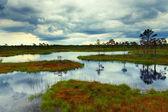Estonian bog — Stock Photo