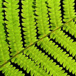 Leaf of fern - Stock Photo
