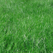 Green grass blades — Stock Photo