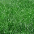 Green grass blades — Stock Photo #6960039