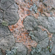 Lichen background — Stock Photo