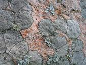 Lichen background — Stock Photo
