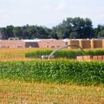 Harvesting a field of corn — Stock Photo
