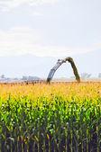 Corn chopped loading a waiting truck — Stock Photo