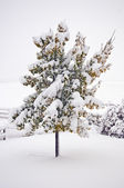 Heavy Early Snow — Stock Photo