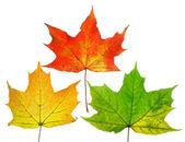 Mooie herfst bladeren — Stockfoto