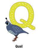 Quail Q — Stock Vector