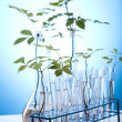 Plants in test tubes in  laboratory  — Stock Photo