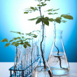 Stock Photo: Plant growing in test tubes in laboratory