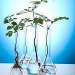 Plants and laboratory — Stock Photo #7138149