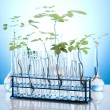 Ecology laboratory experiment in plants — Stock Photo #7138263