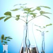 Plants and laboratory — Stock Photo #7138325