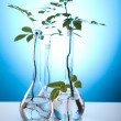 Plants and laboratory — Stock Photo #7138434