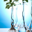 Plants and laboratory — Stock Photo #7138474