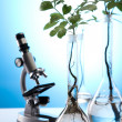 Laboratory glassware containing plants in laboratory — Stok fotoğraf
