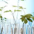 Ecology laboratory experiment in plants — Stock Photo #7139249