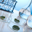 Laboratory glassware containing plants in laboratory — Stock Photo #7139296