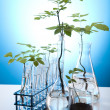 Laboratory glassware containing plants in laboratory — Stock Photo #7139455