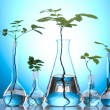 Stock Photo: Laboratory glassware containing plants in laboratory