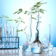 Laboratory glassware containing plants in laboratory — Stock Photo #7139565