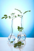 Chemistry equipment, plants laboratory glassware — Stock Photo