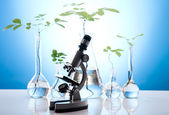 Plant groeit in proefbuizen in een laboratorium — Stockfoto