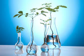 Plants and laboratory — Foto de Stock