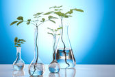 Plant growing in test tubes in a laboratory — Stock Photo