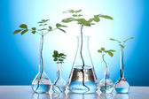 Plants and laboratory — Foto Stock