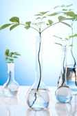 Plants and laboratory — Stockfoto