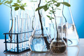 Experimenting with flora in laboratory — Stock Photo
