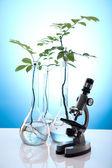 Laboratory glassware containing plants in laboratory — Stock Photo