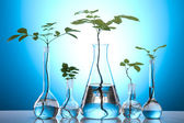 Лабораторная посуда, содержащий растений в лаборатории — Стоковое фото