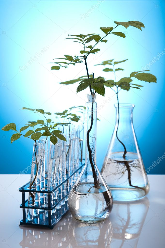 Ecology laboratory experiment in plants. — Stock Photo #7138035
