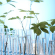 Stock Photo: Plants in test tubes in laboratory
