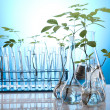 Ecology laboratory experiment in plants — Stock Photo #7140194