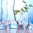 Ecology laboratory experiment in plants — Stock Photo #7140255