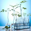 Ecology laboratory experiment in plants — Stock Photo #7140277