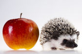Hedgehog with apple — Stock Photo