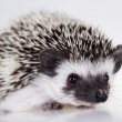 Hedgehog — Stock Photo #7180232